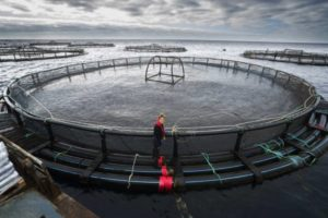 Centro de engorda de salmónidos (CES)
